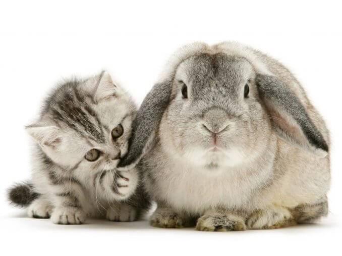 Кого купить: декоративного кролика или кошку