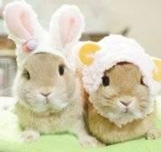 Купить декоративных карликовых кроликов с доставкой