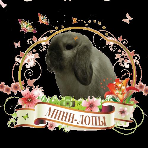 Кролики Мини-лопы