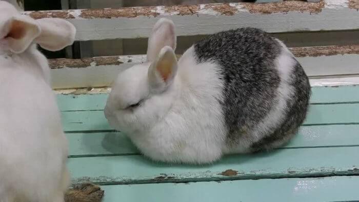 Фото декоративных кроликов без ожирения